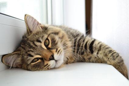 Zahnpflege für eine gesunde Katze