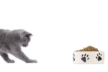 Oftmals nimmt die Katze das neue Katzenfutter nicht an