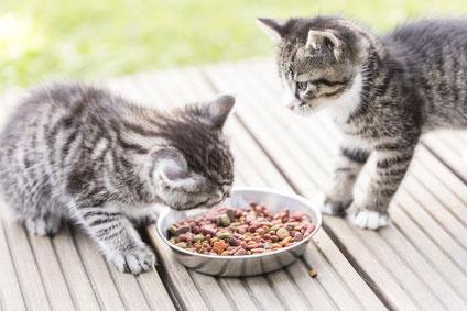 Wir suchen das beste Katzenfutter