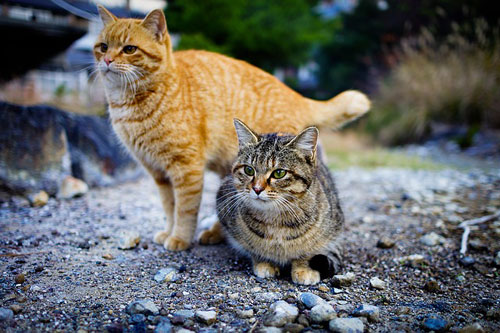 hochwertiges Katzenfutter für zwei zufriedene Katzen