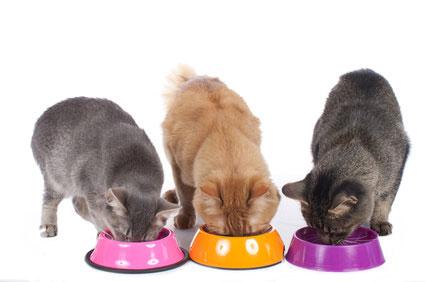Getreidefreies Katzenfutter im Test