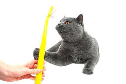 Zahnpflege bei Katzen: Zähne putzen