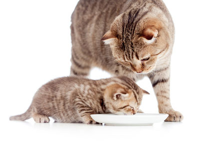 Das Katzenbaby bekommt anderes Futter als die Mutter