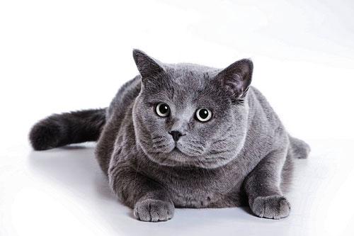 Katzen können von Koservierungsstoffen erkranken