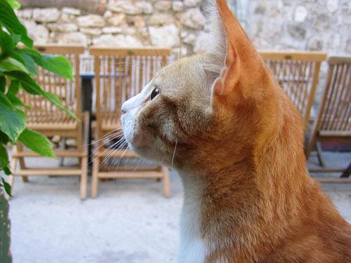 Augen auf beim Kauf von Katzenfutter
