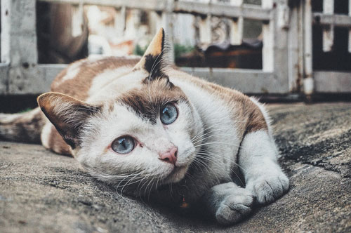 Barf als gesunde Katzenernährung