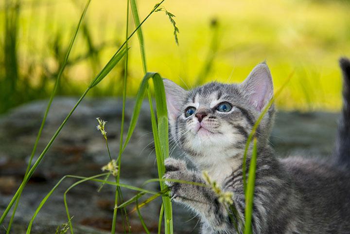 Katze an Grashalmen