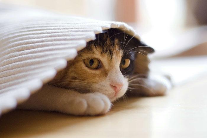 Wenn man nicht handelt leidet die Katze