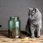 Allergien durch Katzenfutter