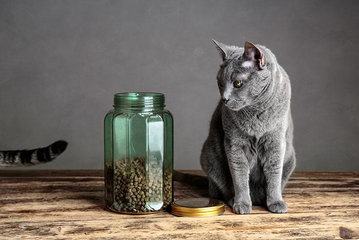 Trockenfutter als Auslöser für Allergien
