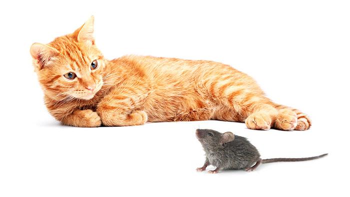 Katzen sollten sich ihr fressen selber jagen dürfen