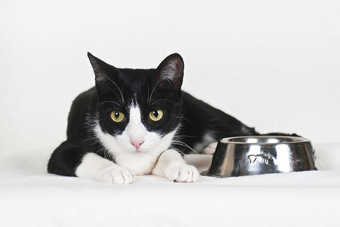 Katze wie aus der Werbung, Futter mit Zucker
