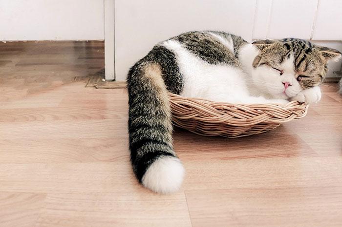 Katze liegt im Korb