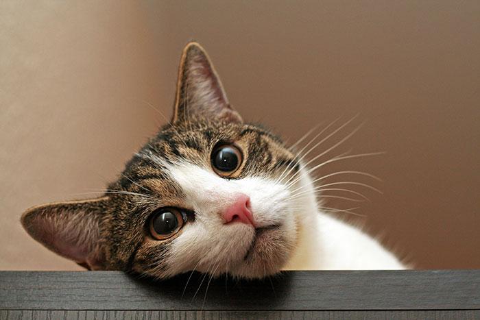 Katze schaut traurig