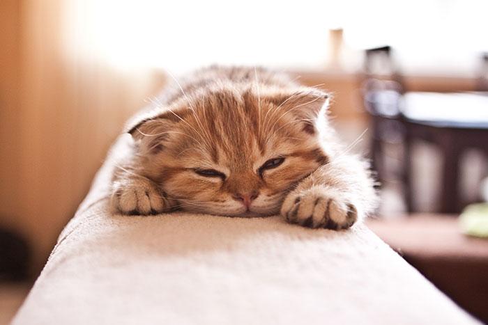 Kitten liegt matt auf der Couch
