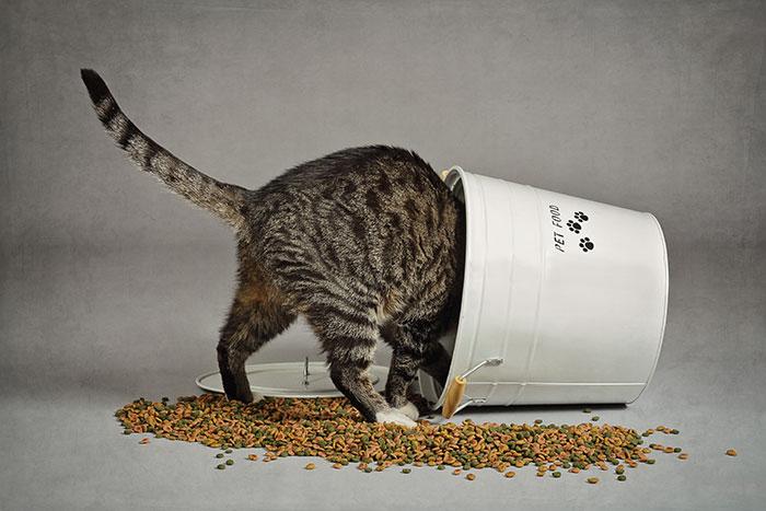 Katze in Trockenfutter Eimer