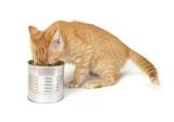 Zusatzstoffe im Katzenfutter – Schädlich oder nützlich?