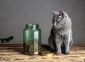 Futtermittelallergien und Intoleranzen bei Katzen