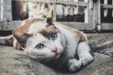 BARF bei Katzen