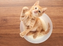 Versteckte Zuckerzusätze im Katzenfutter