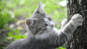Katze ohne Chemiekeulen entwurmen