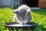 Darf man der Katze Milch geben?