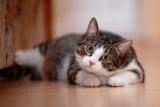 Konservierungsstoffe im Katzenfutter