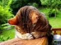 Spezielles Katzenfutter gegen Haarballen?