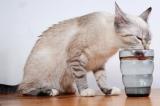 Wasser – Essentiell für Katzen