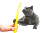 Zahnpflege bei Katzen